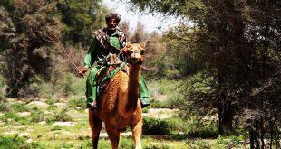 تصاویری از پدران جنوب شرق ایران رودبارجنوب، بلوچستان، جازموریان