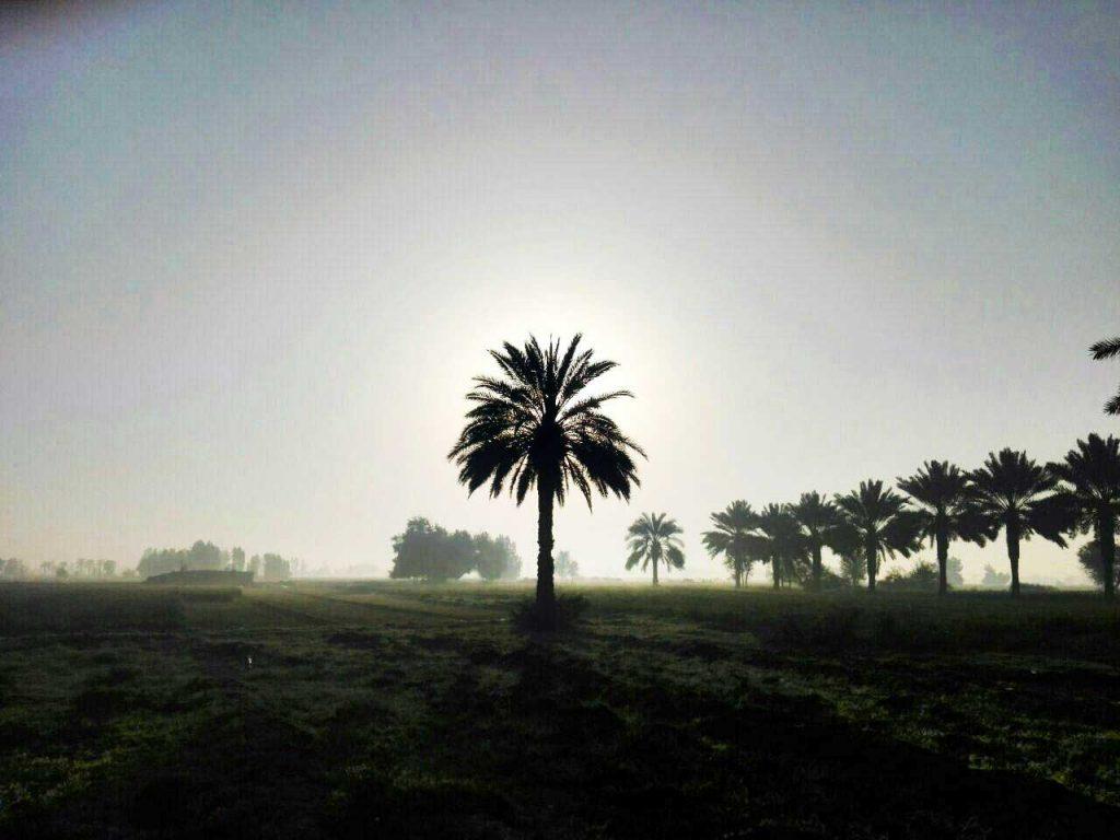 سرزمین نخل و آفتاب