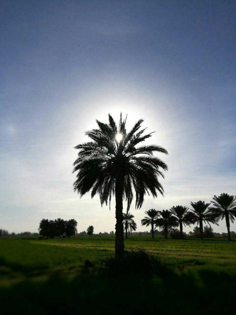 رودبارزمین سرزمین نخل و آفتاب