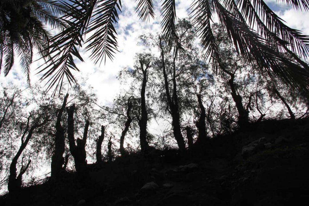 روستای رمشک از شهرستان قلعه گنج