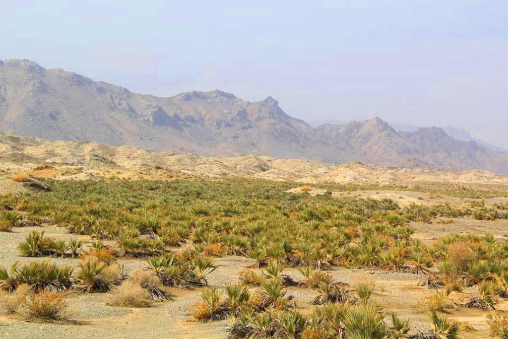 ساخت حصیر با پیش در جنوب کرمان